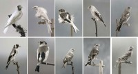 http://carolinanitsch.dreamhosters.com/files/gimgs/th-118_118_hoe-000-birds-complete-2rows.jpg