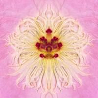 http://carolinanitsch.dreamhosters.com/files/gimgs/th-21_PillowTalkFinal-pink-lr.jpg