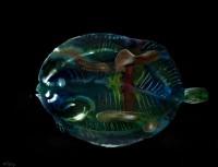http://carolinanitsch.dreamhosters.com/files/gimgs/th-291_ROC-0018-Untitled-Flounder_v2.jpg