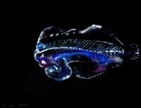 http://carolinanitsch.dreamhosters.com/files/gimgs/th-291_ROC-0019-Untitled-Flounder-2_v2.jpg