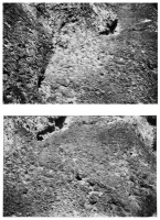 http://carolinanitsch.dreamhosters.com/files/gimgs/th-46_46_wall-jeff-rock-surface.jpg